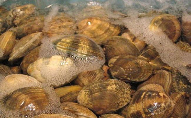 Người Nhật chỉ mất 10 phút để nghêu, sò nhả hết cát, rau héo được hồi sinh, thịt cá tươi roi rói nhờ cách pha nước đơn giản không ngờ