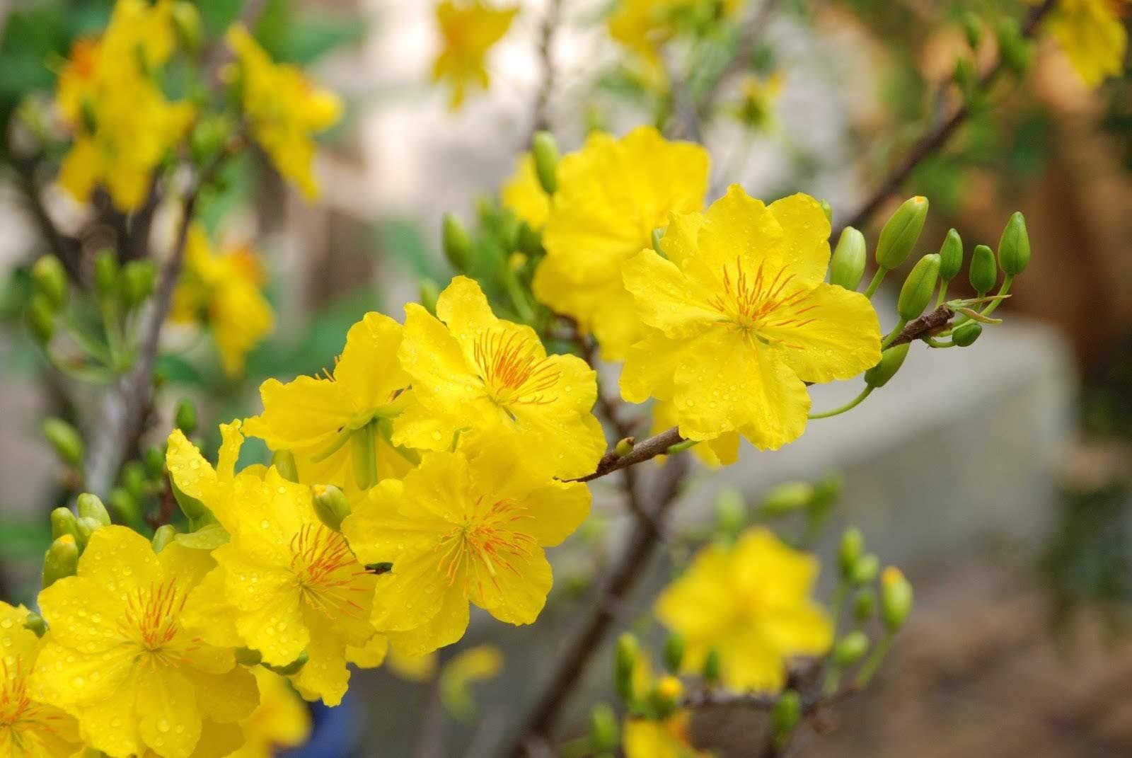 20 loại hoa nên chưng trong ngày Tết để cả năm gặp nhiều may mắn, tài lộc