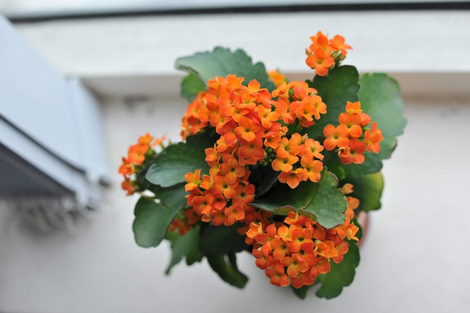 Hoa sống đời chưng Tết Canh Tý 2020
