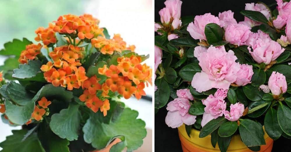 14 loại hoa nên chưng trong ngày tết để gặp nhiều may mắn, tài lộc